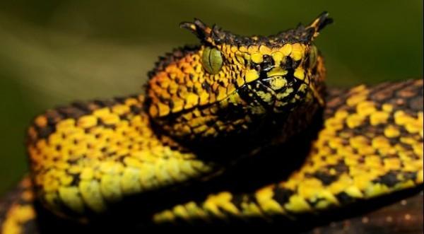 Nueva especie de serpiente es hallada en Tanzania