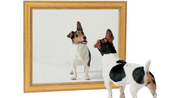 Sabes por qu los perros y gatos no se pueden ver en el Ver espejo publico de hoy