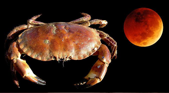 Mira la foto de un supuesto cangrejo en Marte