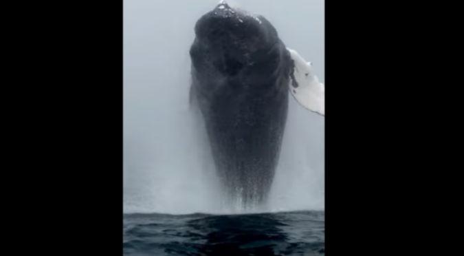 ¡Impresionante! Turista graba el increíble momento en que una enorme ballena sale del mar