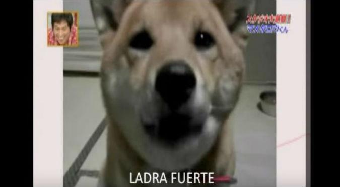 ¡WTF! A este perro le pidieron que ladre más despacio ¡Y LO HIZO! – VIDEO