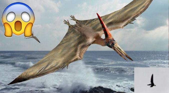 ¡No puede ser! Habrían grabado a pterodáctilo volando en EE.UU – VIDEO