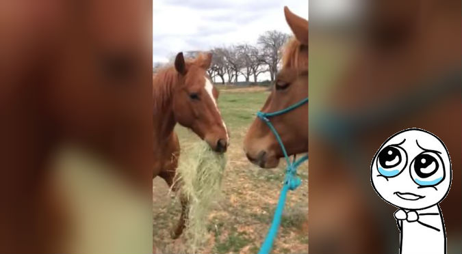 ¡'Friendzoneado'! Ni los caballos se salvan de la 'friendzone' – VIDEO