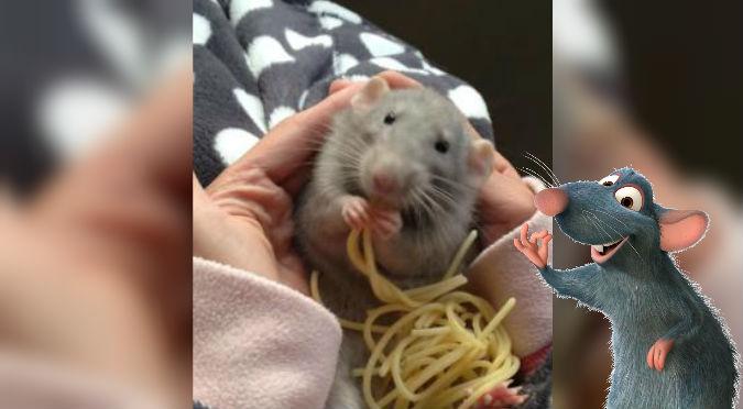 ¿Remy eres tú? Esta ratita comiendo fideos es lo más tierno que verás – VIDEO