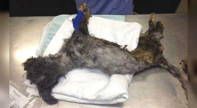 Facebook: Encontraron a perro al borde de la muerte en la basura, hoy luce así – FOTOS