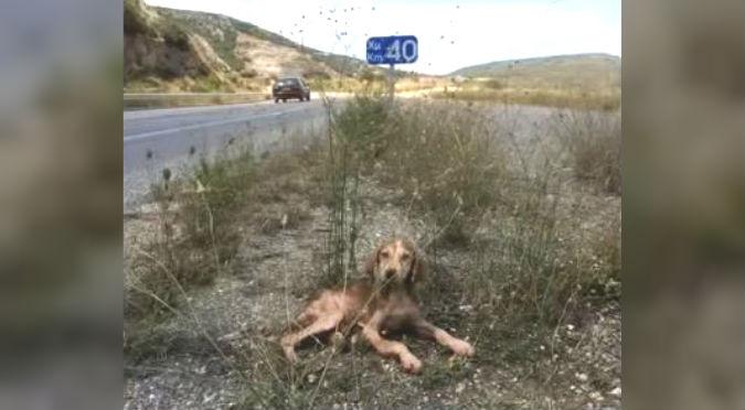YouTube: Abandonaron a perrito enfermo en medio de la nada, felizmente…