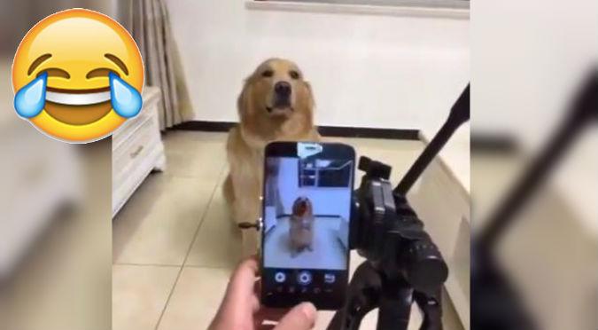 Facebook: Este perro sonriendo cuando le toman una foto es demasiado tierno – VIDEO