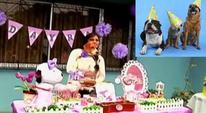 ¡Catering perruno! Ahora puedes hacerle un cumpleaños temático a tu perro – VIDEO