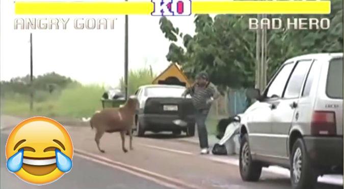 Facebook: Este video nos enseña el por qué no debemos meternos con una cabra