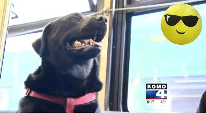 YouTube: Perro aprendió a ir solo al parque… ¡EN UN BUS!