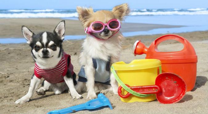 ¡Perritos al agua! Argentina tiene playa exclusiva para perros y humanos – VIDEO