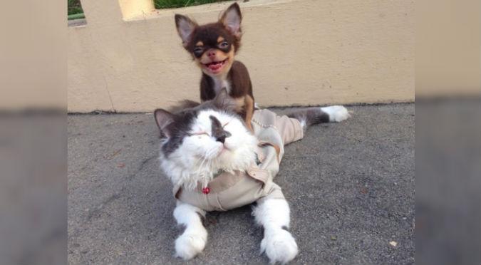 adorable amigo