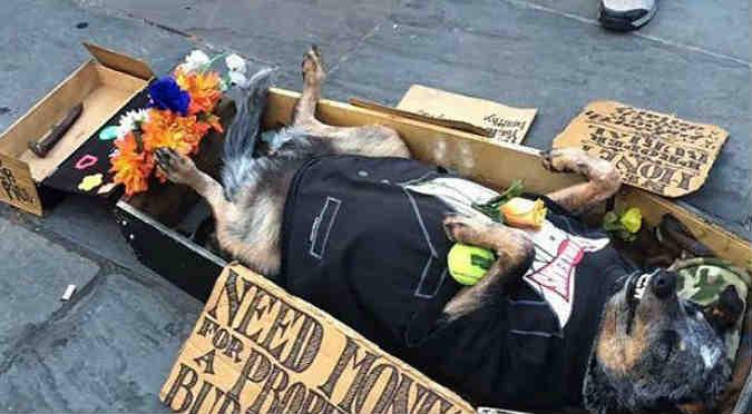¡Este perrito haciéndose el muerto para pedir limosna es lo más divertido que verás!