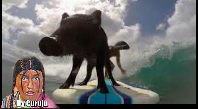 YouTube: Conoce al cerdo surfista y más 'cool'