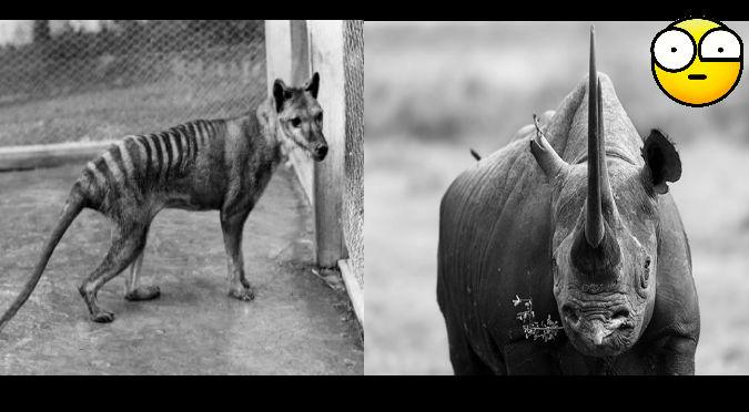 YouTube: Conoce a los animales más raros que se extinguieron