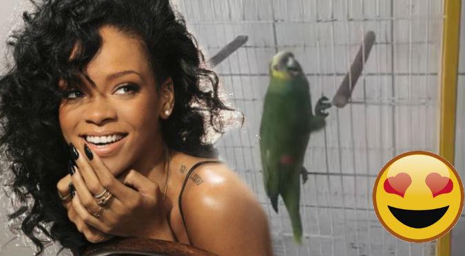 YouTube: Mira como este loro imita a Rihanna ¡OMG!