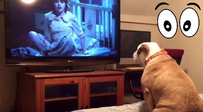 YouTube: Así reaccionó un bulldog  al ver una película de terror