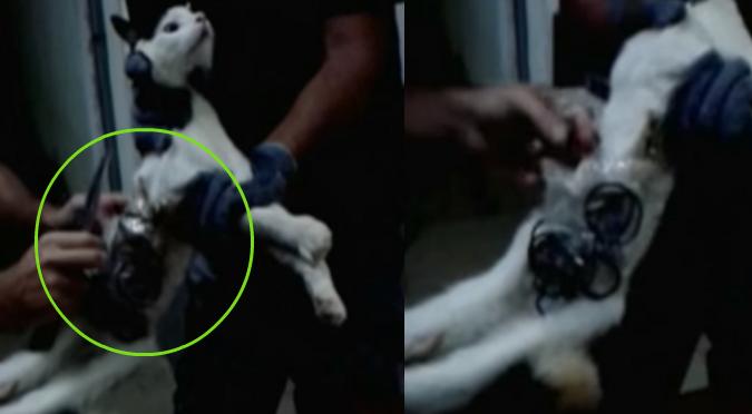 YouTube: Atrapan gato entrenado para llevar celulares a la cárcel