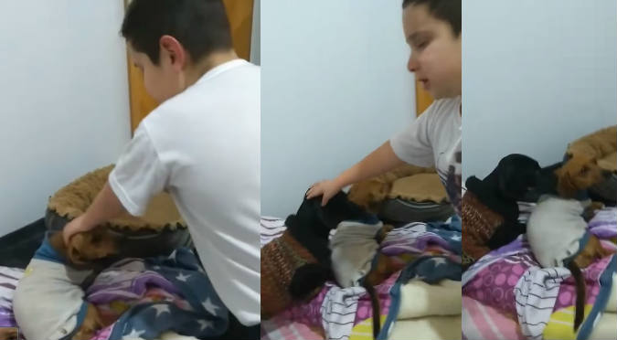 Niño suplica a su madre para adoptar a perrita que encontró (VIDEO)