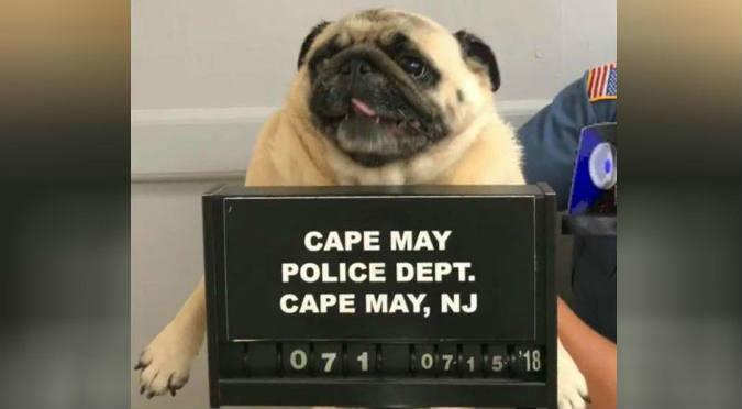 Facebook: Policía arresta a perrita por escaparse de su casa