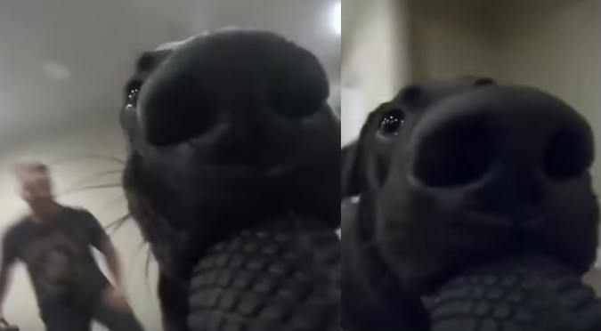 Perrito robó una GoPro y graba todo su recorrido (VIDEO)