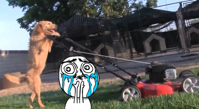 Perro muestra su habilidad para 'cortar el césped' y se vuelve viral (VIDEO)