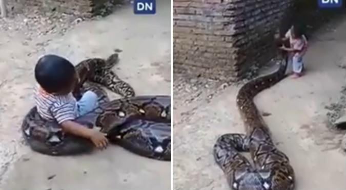 Niño juega con serpiente pitón y deja en shock al mundo (VIDEO)