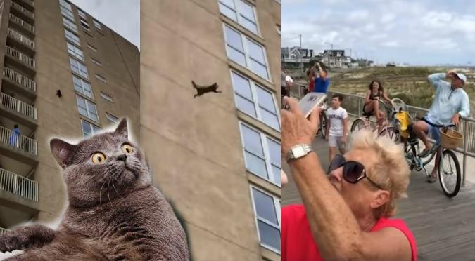 Viral: Gato cae de un edificio y logra salir ileso (VIDEO)