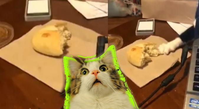 Gato astuto roba pan y se vuelve viral (VIDEO)