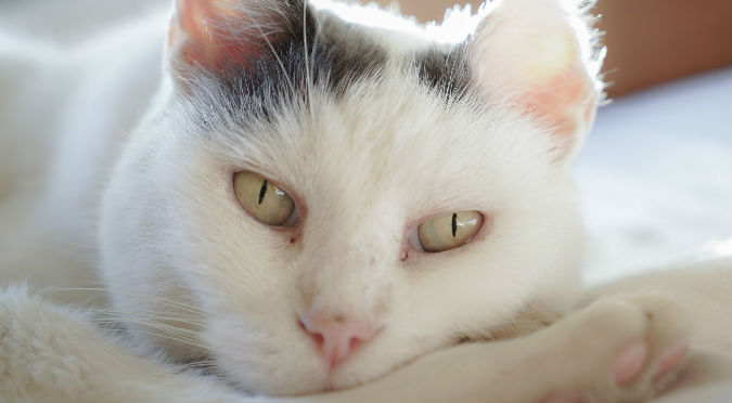 Gato impacta con su 'terrorífica' forma de dormir (VIDEO)