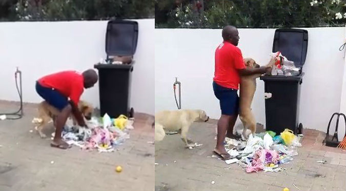 Perro destroza la basura y recibe lección que nunca olvidará