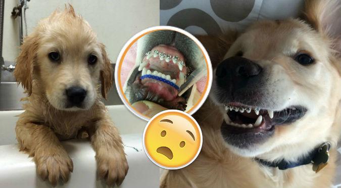 ¿Brackets para perros? Mira el caso del tierno Wesley