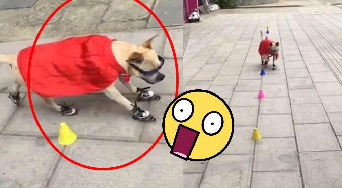 Perrito demuestra su habilidad con los patines y se vuelve viral (VIDEO)