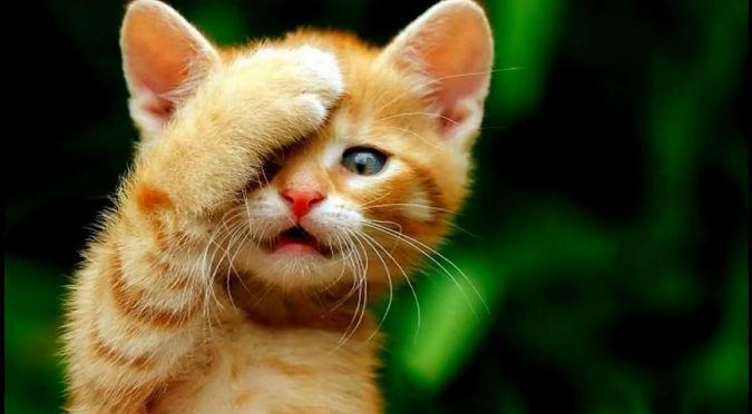 Perros 'atacan' a indefenso gatito y se vuelve viral (VIDEO)