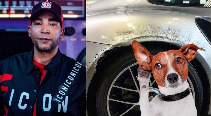 Perro de Don Omar dañó su lujoso auto y ahora pasará esto con el can (VIDEO)